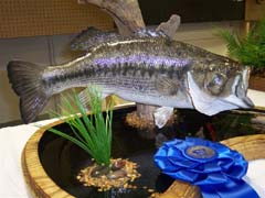 largemouth bass taxidermy by Ohio taxidermist Fritz Birkhimer