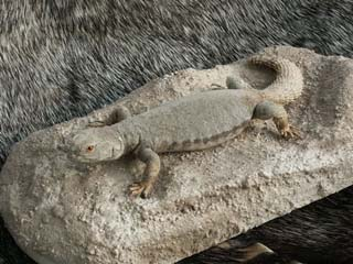 reptile_taxidermy/lizard