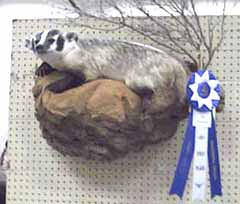 Badger taxidermy by Texas taxidermy studio Lost Pines Taxidermy.