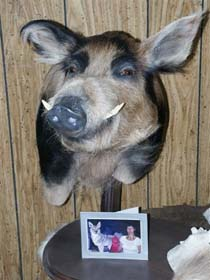 boar_taxidermy