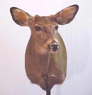button buck mount on altered form