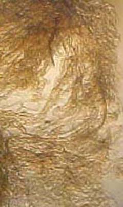 whitetail collagen fibres