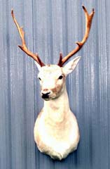 deer taxidermy by South Carolina Taxidermist Rick Durham