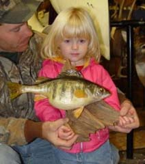 Perch taxidermy by Indiana taxidermist Jeff Sonner