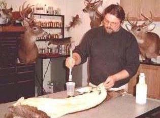 Removing ear cartilage from a whitetail deer cape.