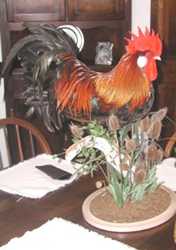 Rooster taxidermy by Delaware taxidermist George Roof.