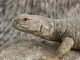 wholesale reptile taxidermy